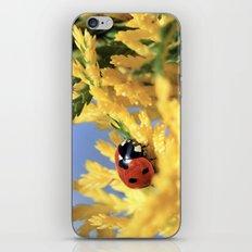 Conifer Lady iPhone & iPod Skin