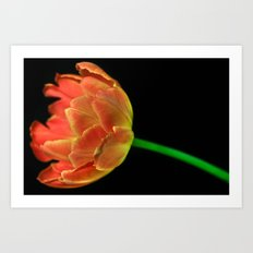 Tropical Tulip Flames Art Print