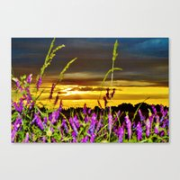 Evening is coming Canvas Print