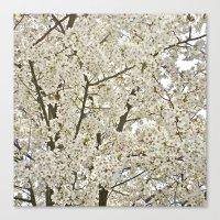 cherry blossom tree Canvas Print