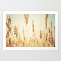 the cornfield ... Art Print