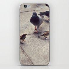 I envy birds iPhone & iPod Skin