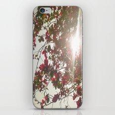 Bright Morning iPhone & iPod Skin