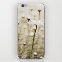 Daisy Fields 4eva iPhone & iPod Skin