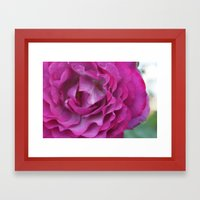 Purple Rose Framed Art Print