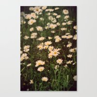 Summer daisy Canvas Print