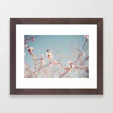 Just blooming. Framed Art Print