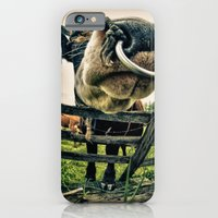 iPhone & iPod Case featuring Holy cow its a bull by Carla Broekhuizen