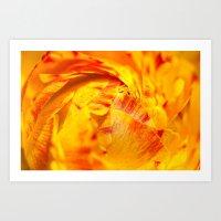 Ranunculus Red/orange Art Print