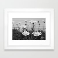 Backyard Daisies Framed Art Print