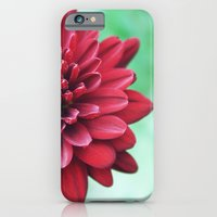 iPhone & iPod Case featuring Chrysanthemum by goguen