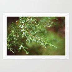 Pine Mist Series: 2 Art Print