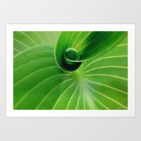 Leaf / Hosta With Drop (… Art Print