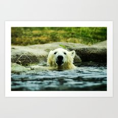 Young Pole Bear Swimming Art Print