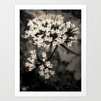Valeriana sitchensis Art Print