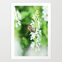 Climbing Bee Art Print