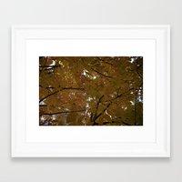 Sunlit Autumn Tree Leave… Framed Art Print