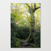 The Old Ways Canvas Print