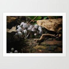 Mushrooms!! white mushrooms! Art Print