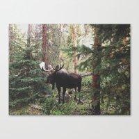 The Modest Moose Canvas Print