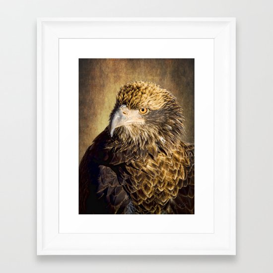 Fine Feathered Friend Framed Art Print