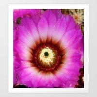 Cactus Flower II Art Print