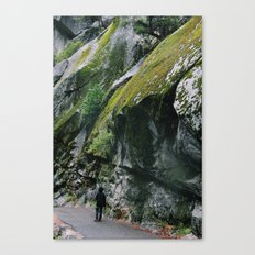 Stacked moss Canvas Print