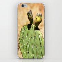Cactus Fruit iPhone & iPod Skin