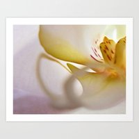 Orchid (Print & Card) Art Print