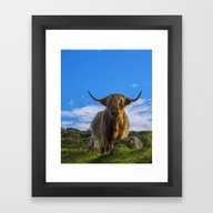 Framed Art Print featuring Highland Cow by Chris Thaxter
