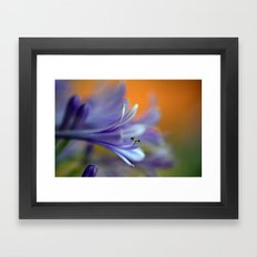 Blue Agapanthus 2786 Framed Art Print