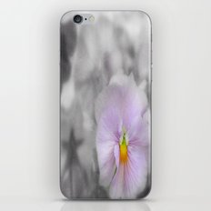 Lilac soft Focus Pansy iPhone & iPod Skin
