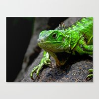 The Lizard King Of Aruba Canvas Print