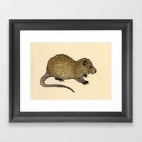 Nutria  Framed Art Print
