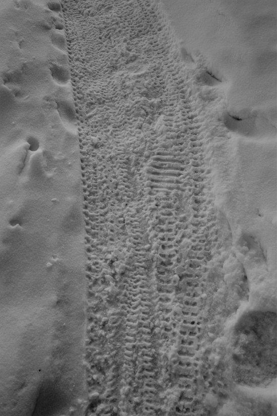 Frozen in Their Tracks Art Print