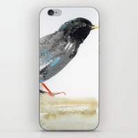 Australian Starling iPhone & iPod Skin