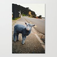 Blue? Sheep? Canvas Print