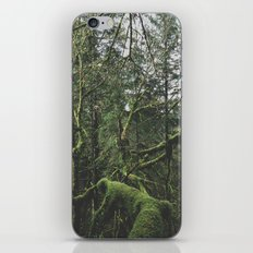 Moss Covered Trees iPhone & iPod Skin