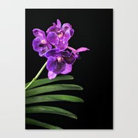 Orchids mean Love; I love Orchids Canvas Print