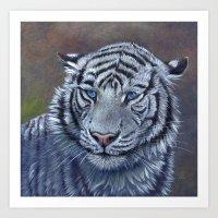 White Tiger - blue eyes Art Print