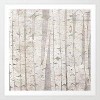 White Birch Trees Art Print