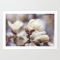 Magnolia Flower Art Print