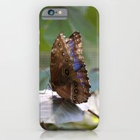 Butterfly Blue iPhone 6 Slim Case