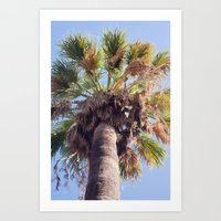 Palm Washingtonia 4099 Art Print