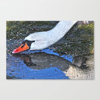Stretch For A Drink Canvas Print