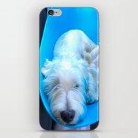 Dog2 iPhone & iPod Skin