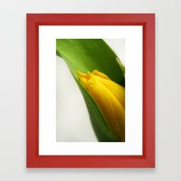 Tulip. Framed Art Print