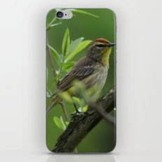 Palm Warbler iPhone & iPod Skin