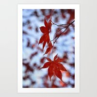 Japanese Red Maple Art Print