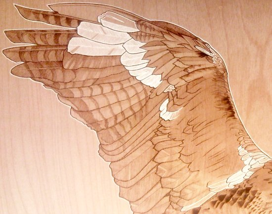 Little Wing Art Print